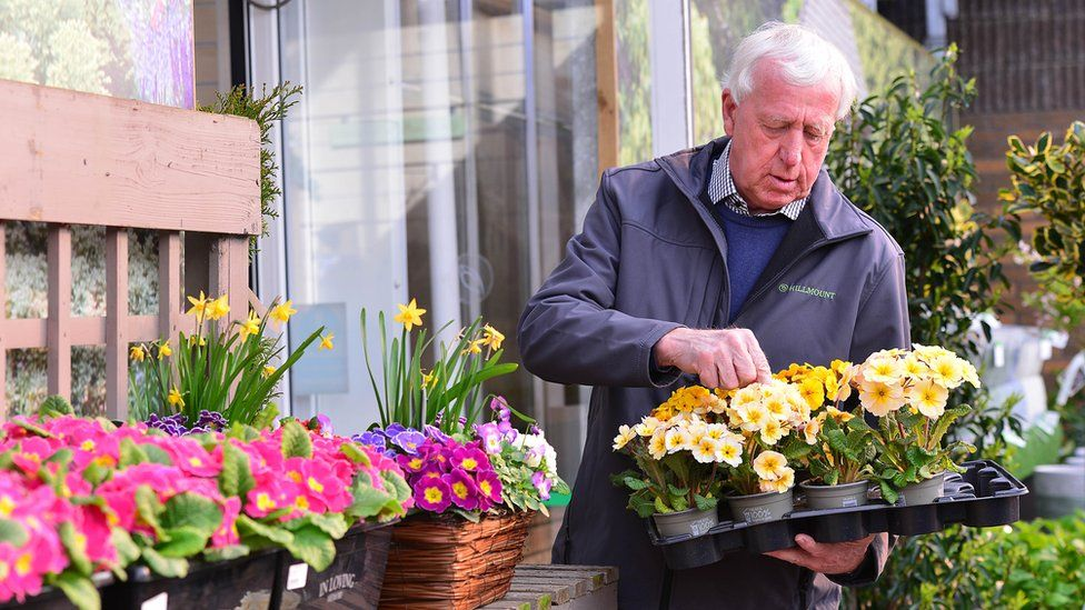 An older man with grey hair looking at and organising a tray of yellow flowers he is holding in his hand, while standing in a garden centre