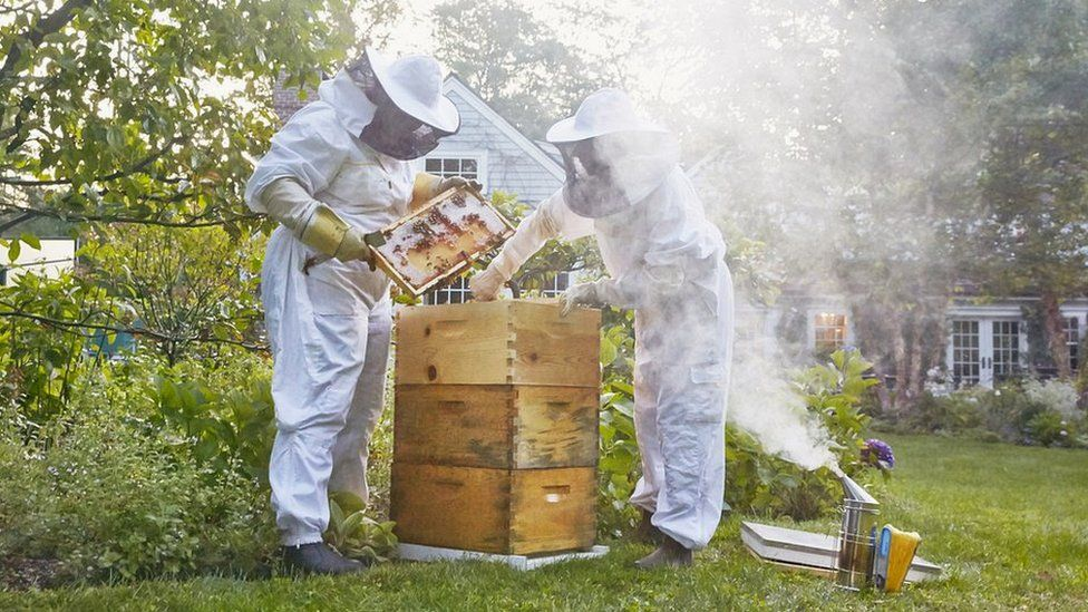 Tech firms use remote monitoring to help honey bees