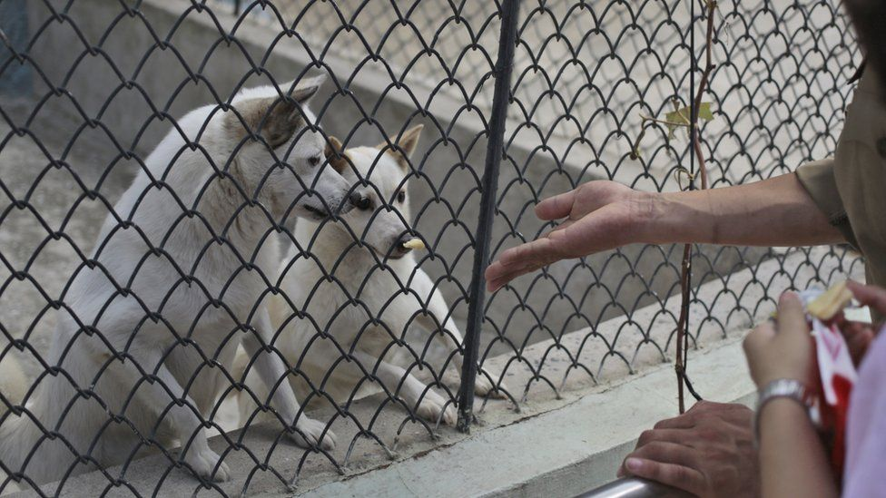 Visitors feed dogs at the newly opened Central Zoo in Pyongyang, North Korea, Tuesday, Aug. 23, 2016.