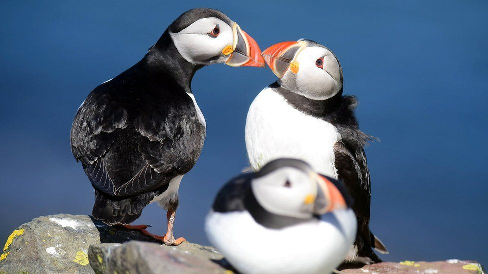Boat owners warned of seabird predators