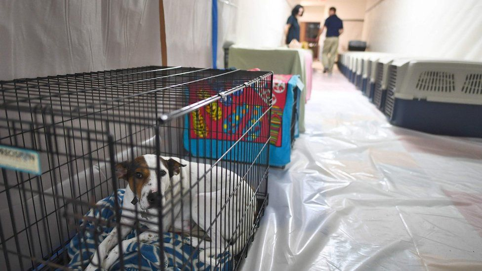 Volunteers take care of pets in a makeshift shelter at the Timberlin Creek Elementary School in St. Augustine, Florida, on October 6, 2016, ahead of hurricane Matthew.