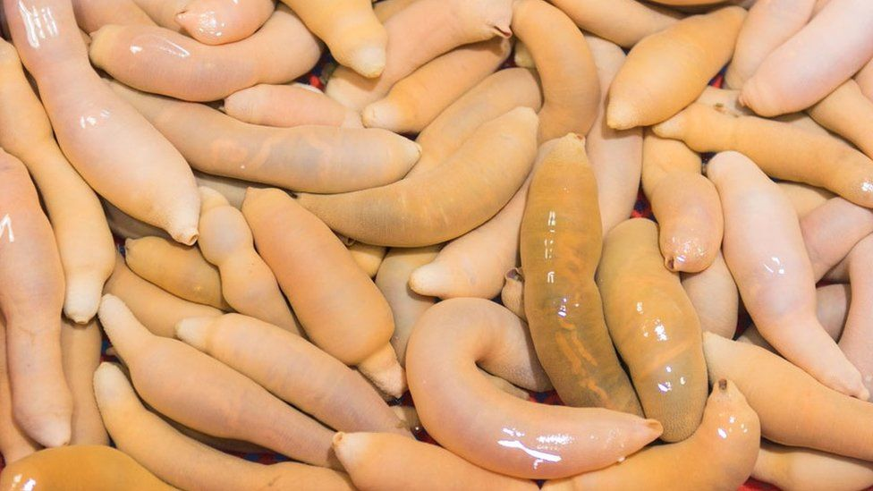 Urechis unicinctus known as penis fish, innkeeper worm or spoon worm, seen here at a market in South Korea