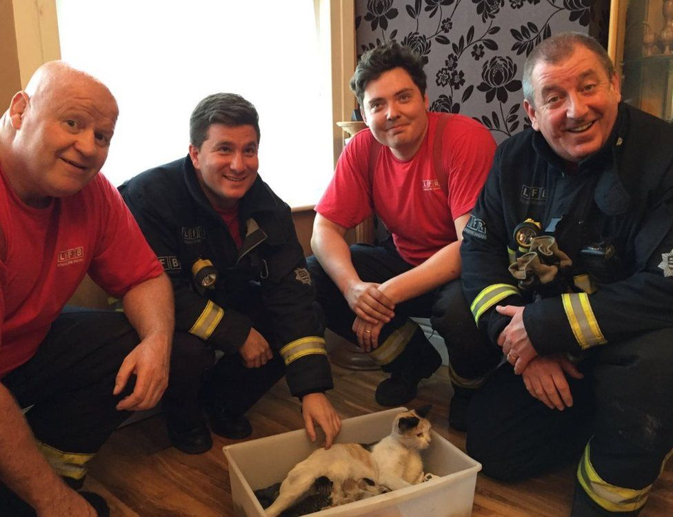 Binky the cat with her rescuers from the fire brigade