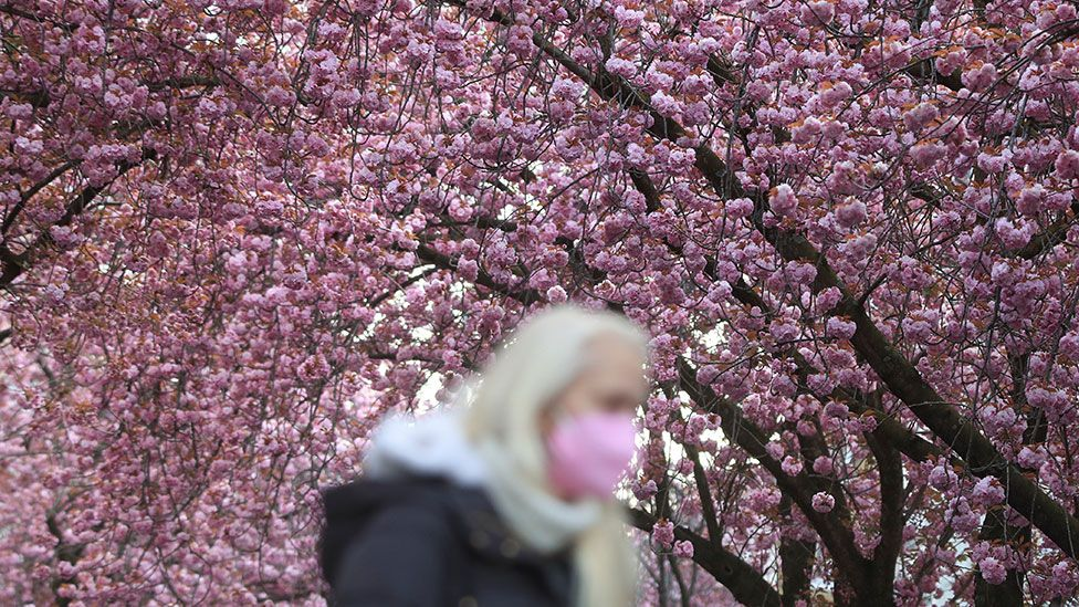 Woman walking by blossom in Bonn, Germany
