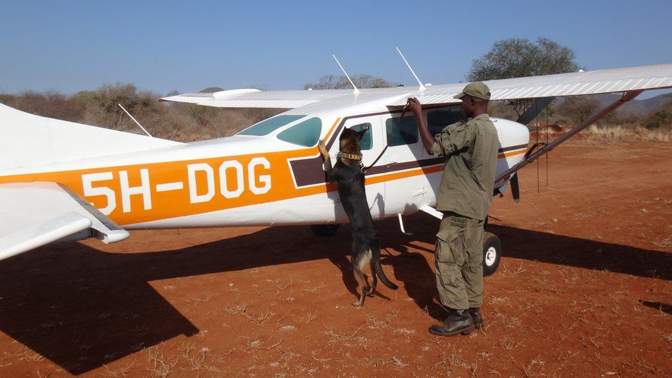 Bo with dog with a warden and a plane