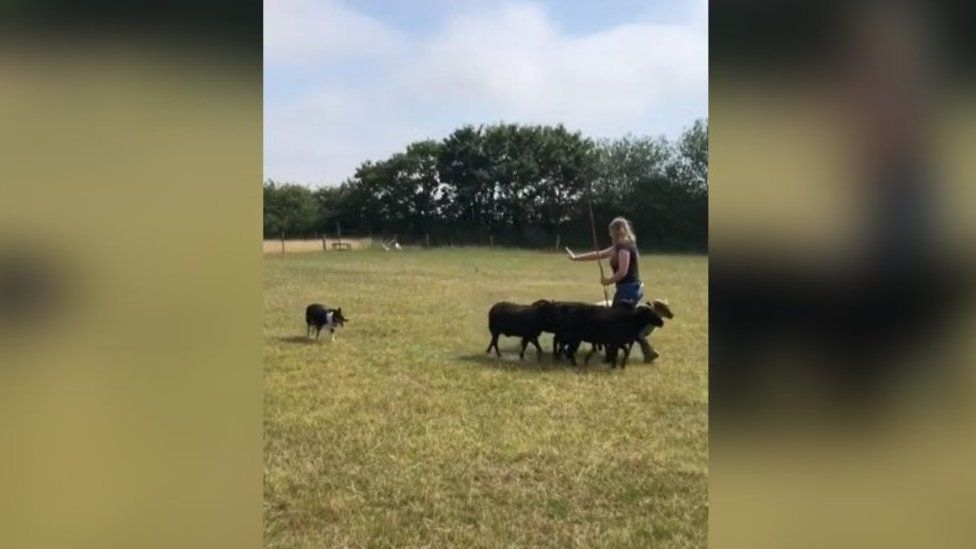 Peggy the dog being trained