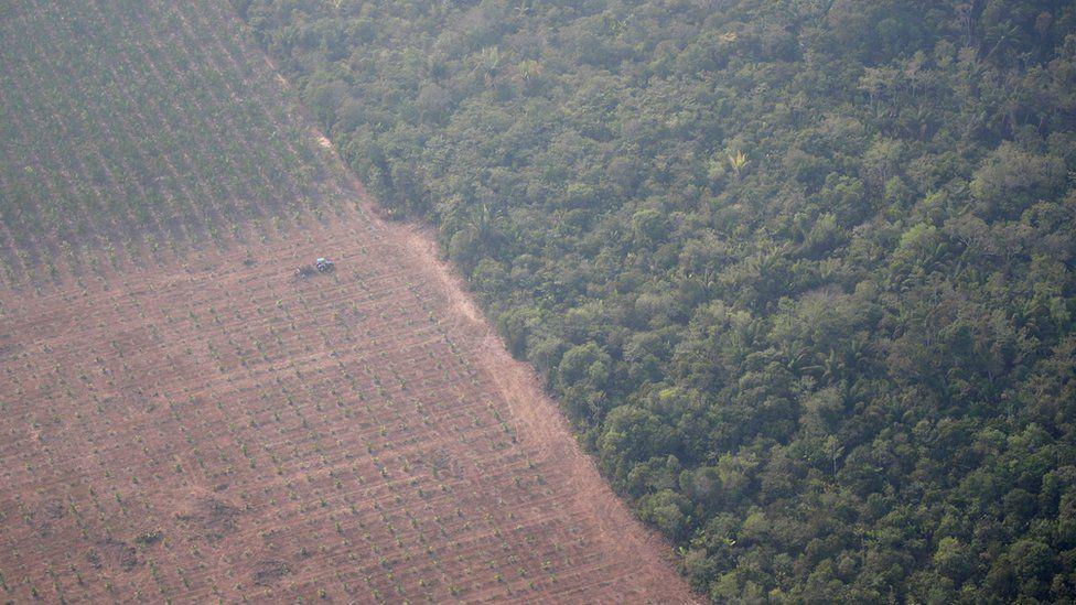Brasil não precisa desmatar mais para ampliar produção, afirma presidente da Sociedade Rural Brasileira