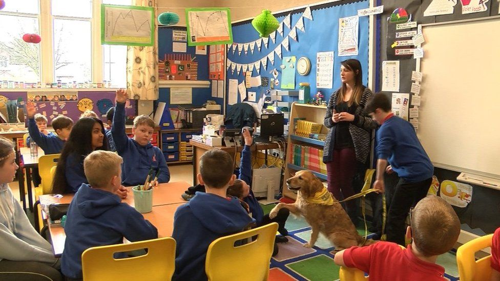 Dog in classroom at Crown Primary