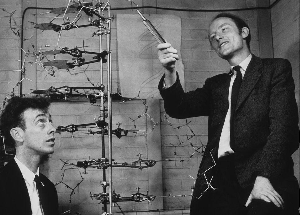 James Watson (l) and Francis Crick (r)