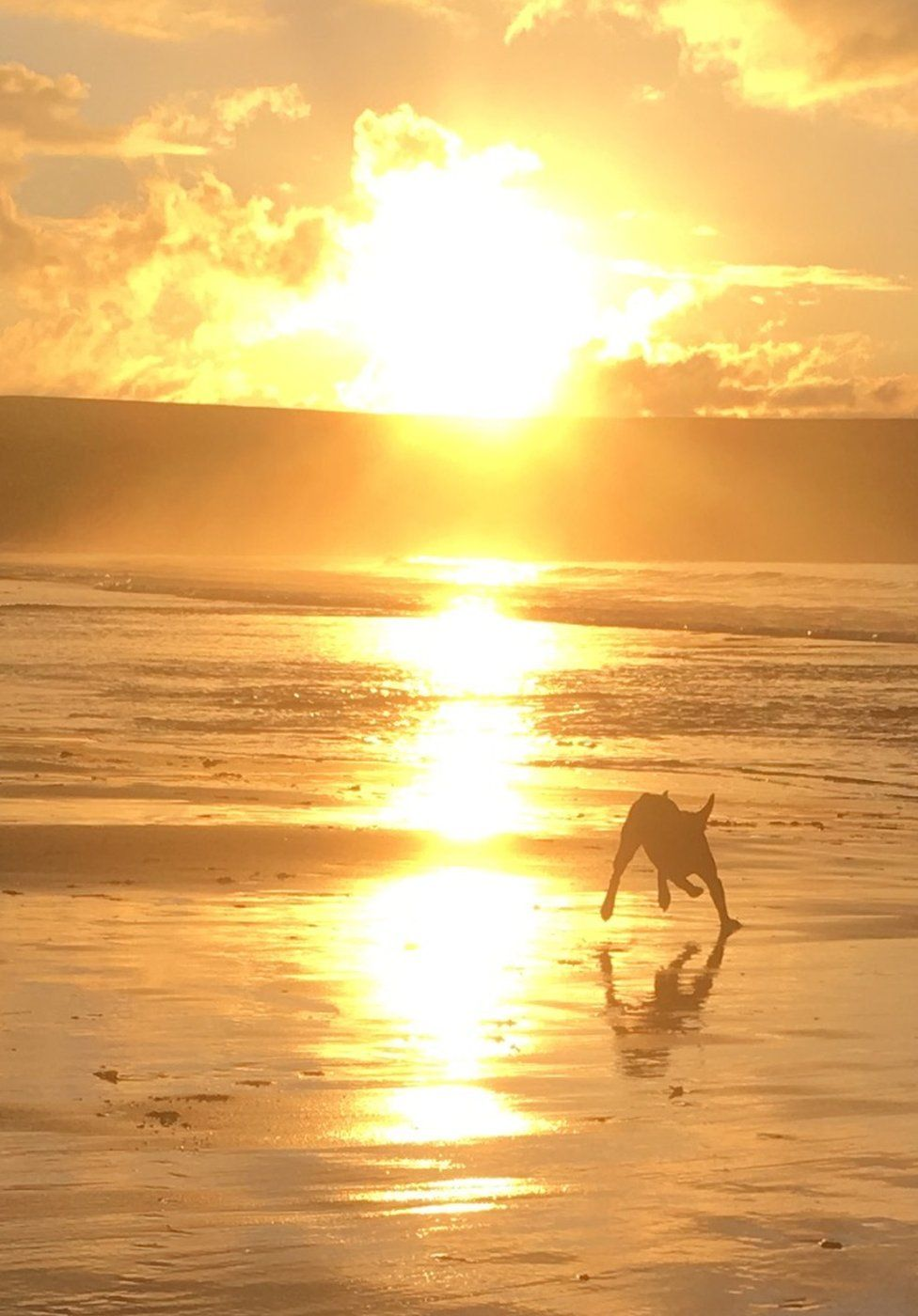 Peppa the chocolate lab on Skaill Beach, Orkney as the sunsets 20th January 2019