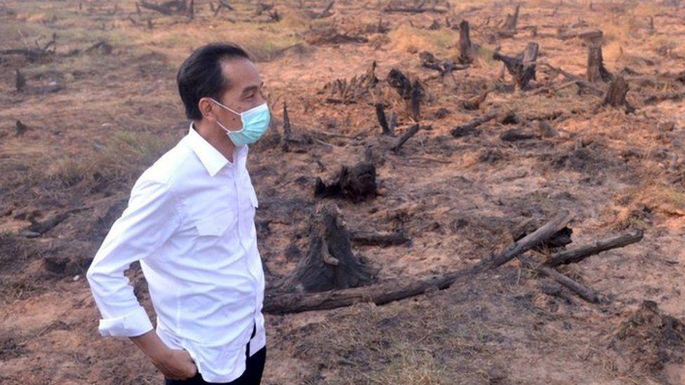 Indonesian President Joko Widodo visits a burned forest in Central Kalimantan province (23 Sept 2015)