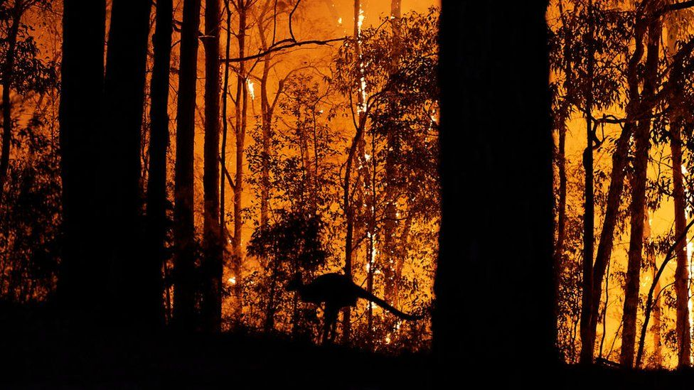 A kangaroo flees an approaching fire front in New South Wales on 15 November 2019