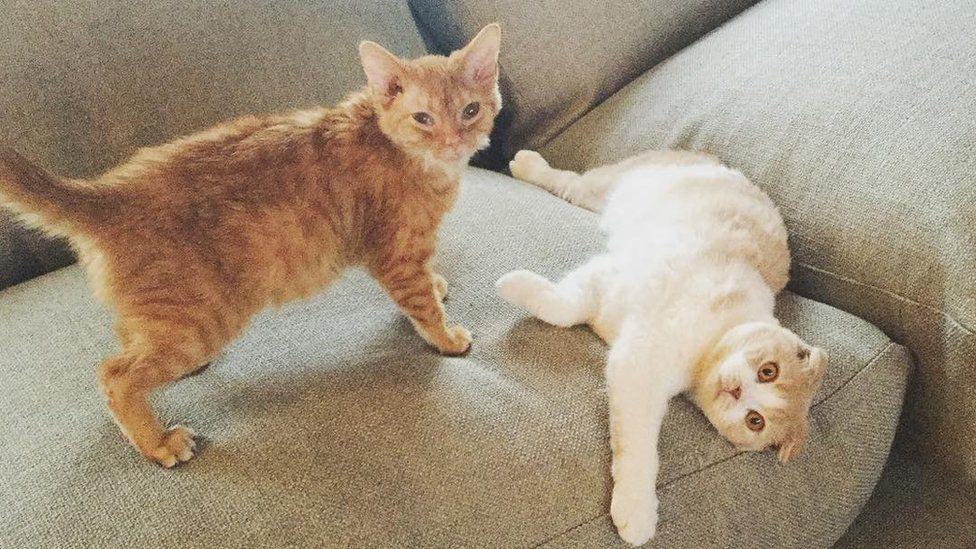 Ed Sheeran's cats