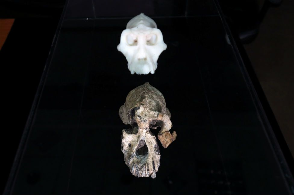 The remains of an ancient skull are displayed alongside a 3D reconstruction of the skull as it would have been millions of years ago.