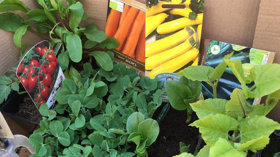 Vegetable plants and seed packets