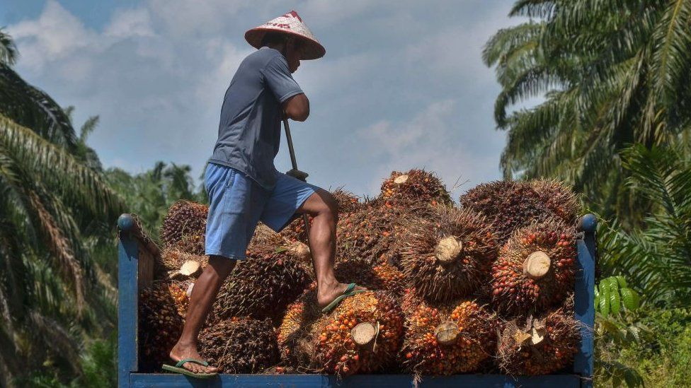 What's the link between palm oil and the Kashmir dispute?