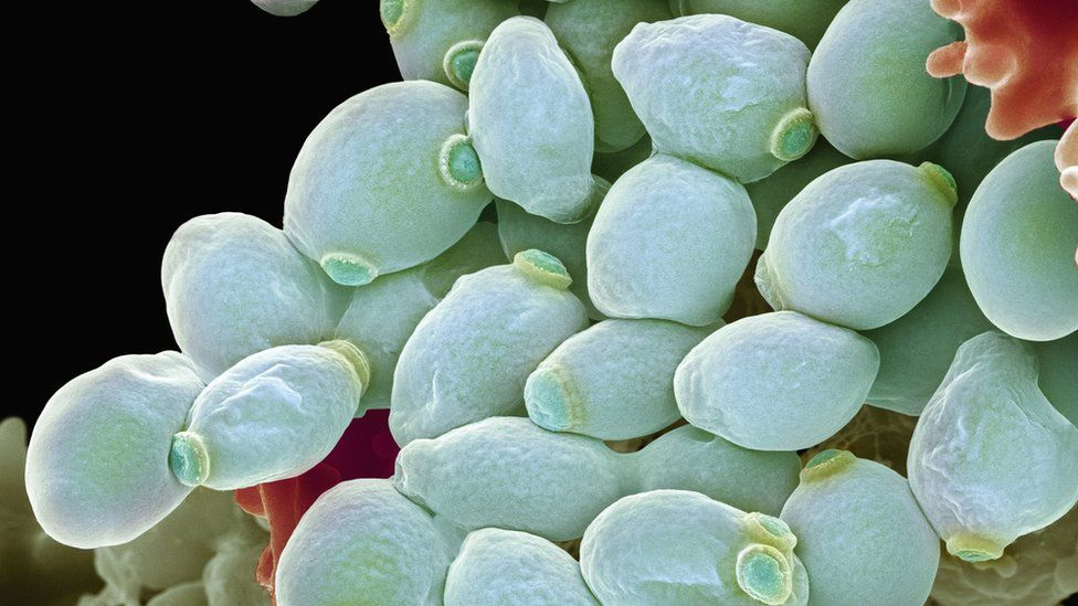 Fungal infection 'threat' to human health