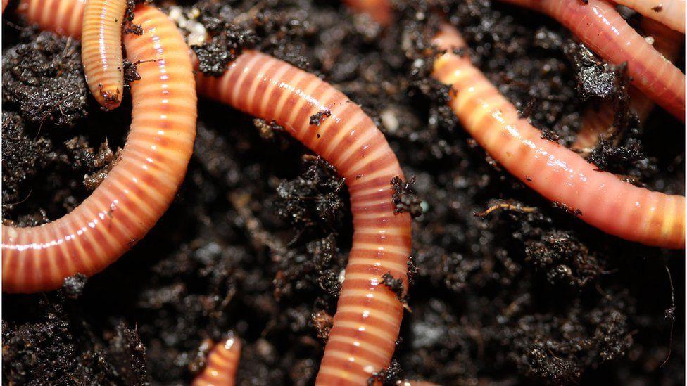 Worms (Image: BBC)