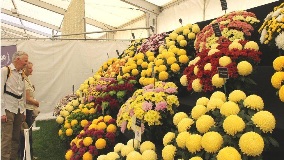 Blodau lliwgar // What a colourful display