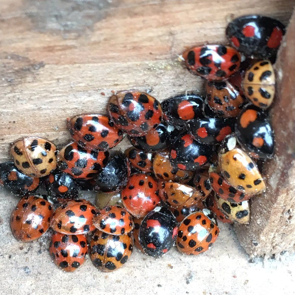 Variety of ladybirds in a crate