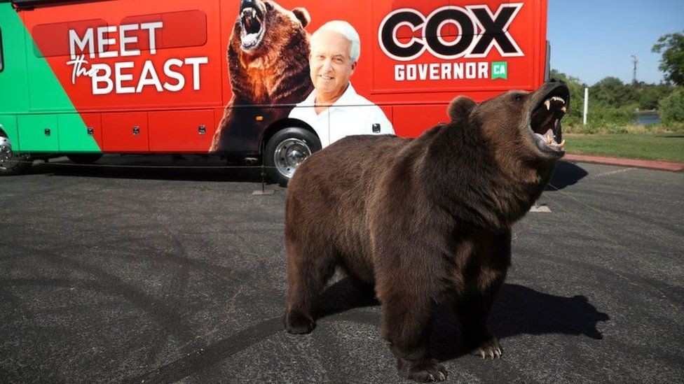 One candidate campaigned with a 1,000lb brown bear