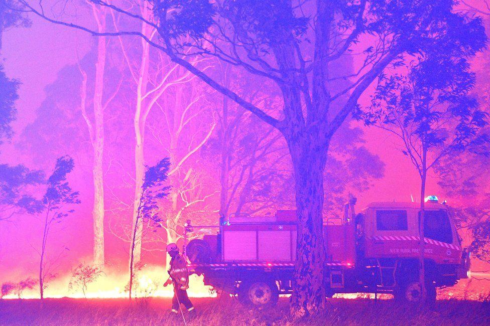 Пожежники тушать дерева навколо міста Новра