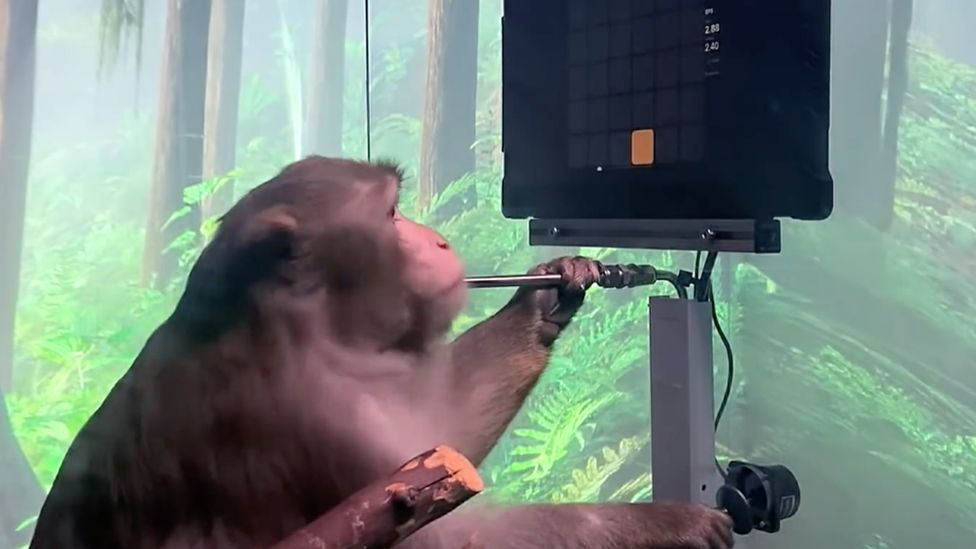 Pager the monkey in YouTube video