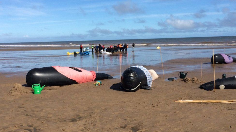 Whale rescue exercise