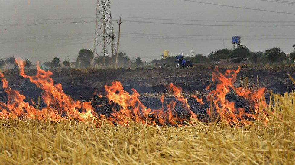 Stubble burning outside Ludhiana on the outskirts of Punjab