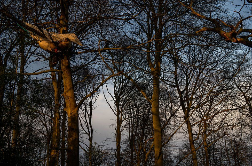 Activists sleeping in a tree