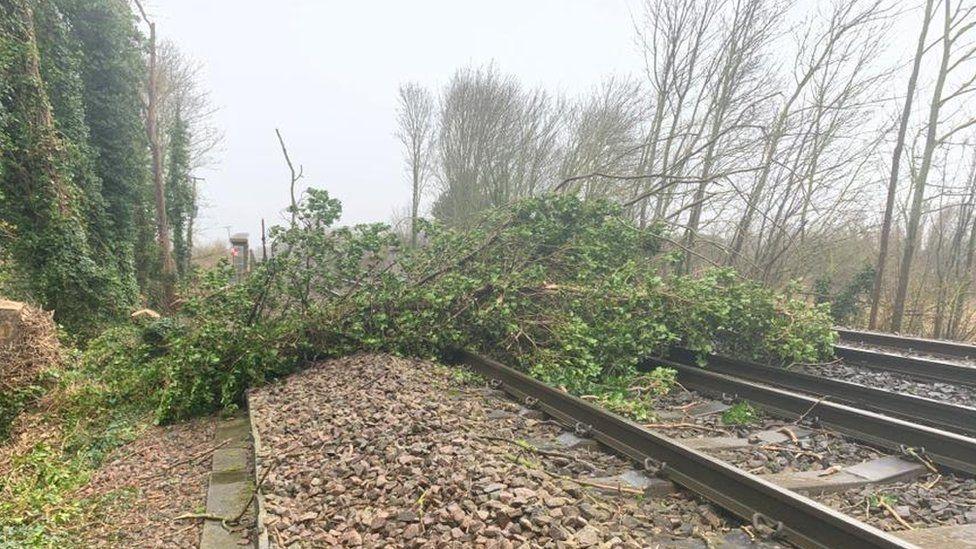 A tree on rail tracks