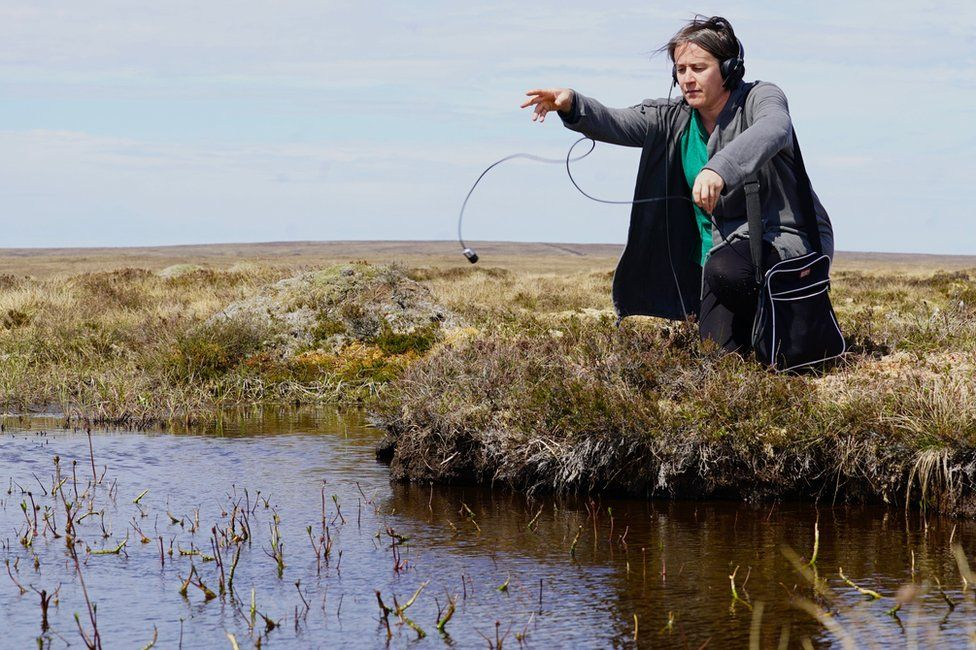 Kathy Hinde uses a hydrophone to record sounds from the bog