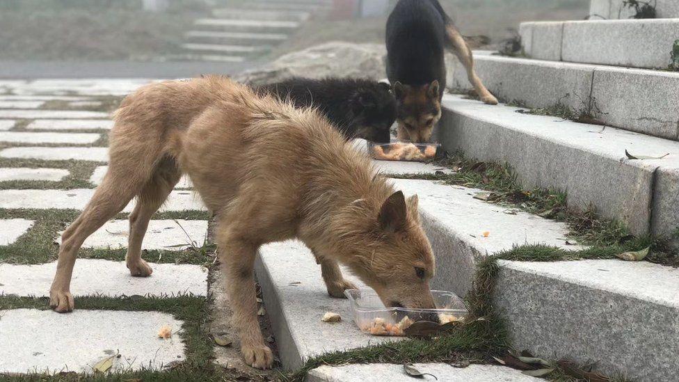 Dogs in Shenzhen