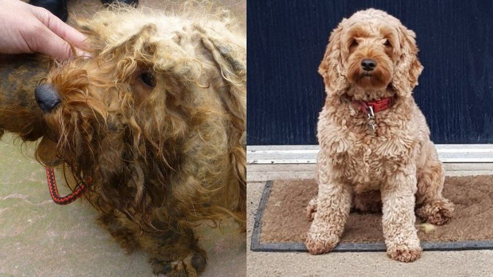 Mabel when she was found, and after rehabilitation
