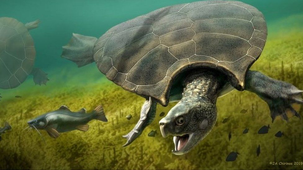 A tartaruga pré-histórica do tamanho de um carro que viveu na Amazônia