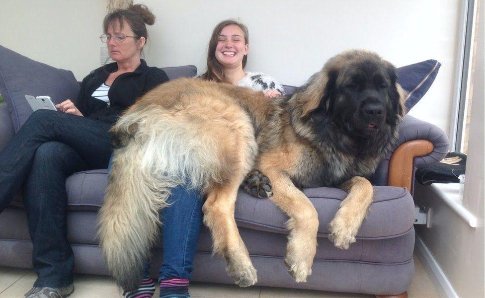 Hagrid sitting on his family