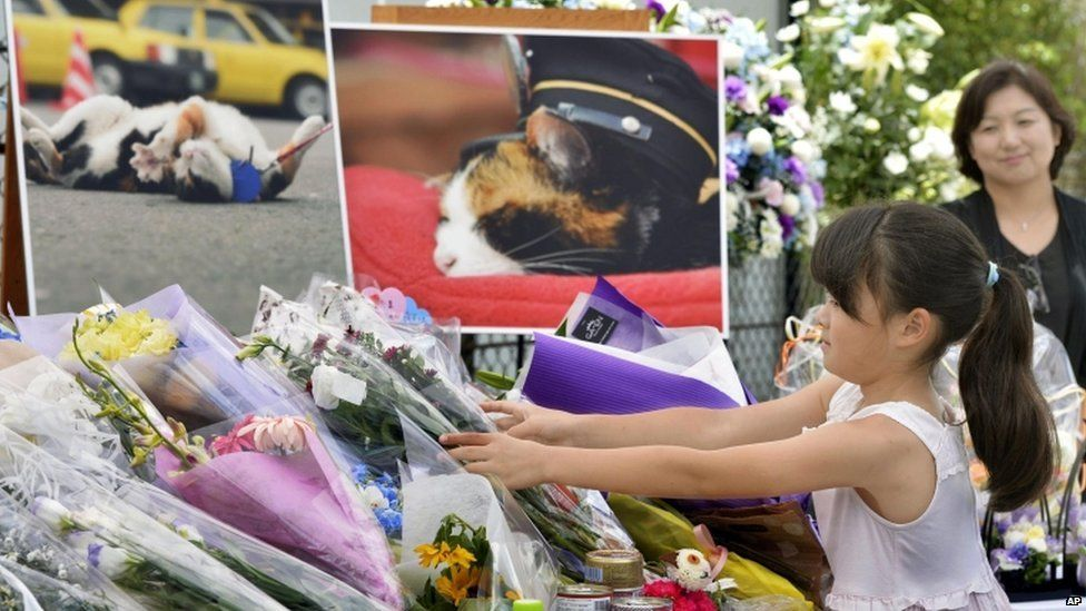 A girl lays bouquets of flowers at an altar especially set up for a funeral of Tama, a cat stationmaster, in Kinokawa City, Wakayama Prefecture, western Japan, on 28 June 2015