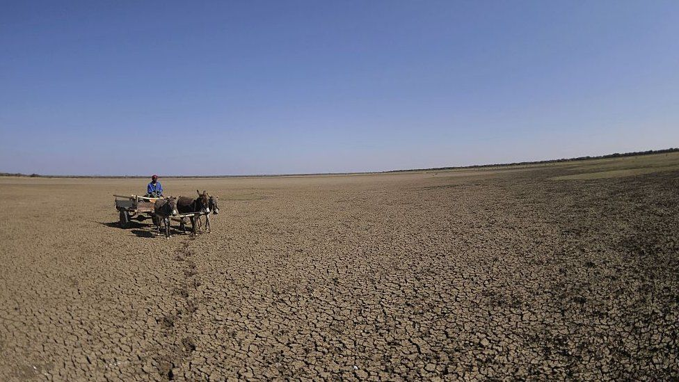 A man crosses the dried Bokaa Dam with a donkey cart on the outskirts of Gaborone on August 14, 2015 in Botswana