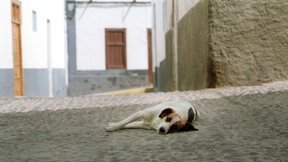 Dog lies down during afternoon siesta