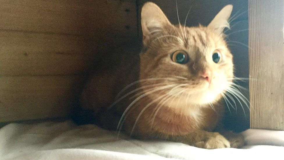Ginger tabby cat on cushion