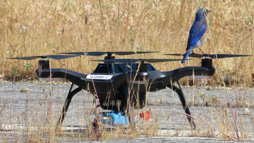 Bird on drone on the ground