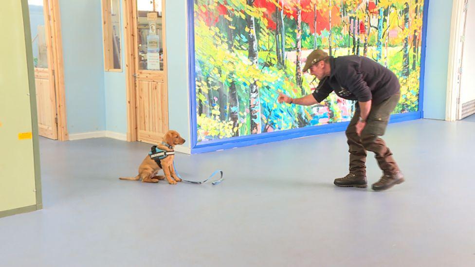 Martin Ball trains the Bravehound puppies.