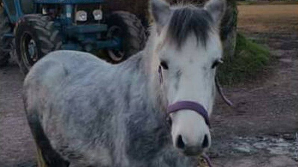 Emry the pony