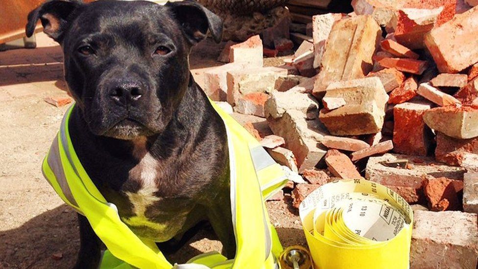 A Staffordshire terrier at a building site. The black-furred dog is wearing a luminous jacket, with various bricks and rubble behind him. He looks at the camera with slight frustration, as though he would rather be chowing down on grub than helping out with the building work.