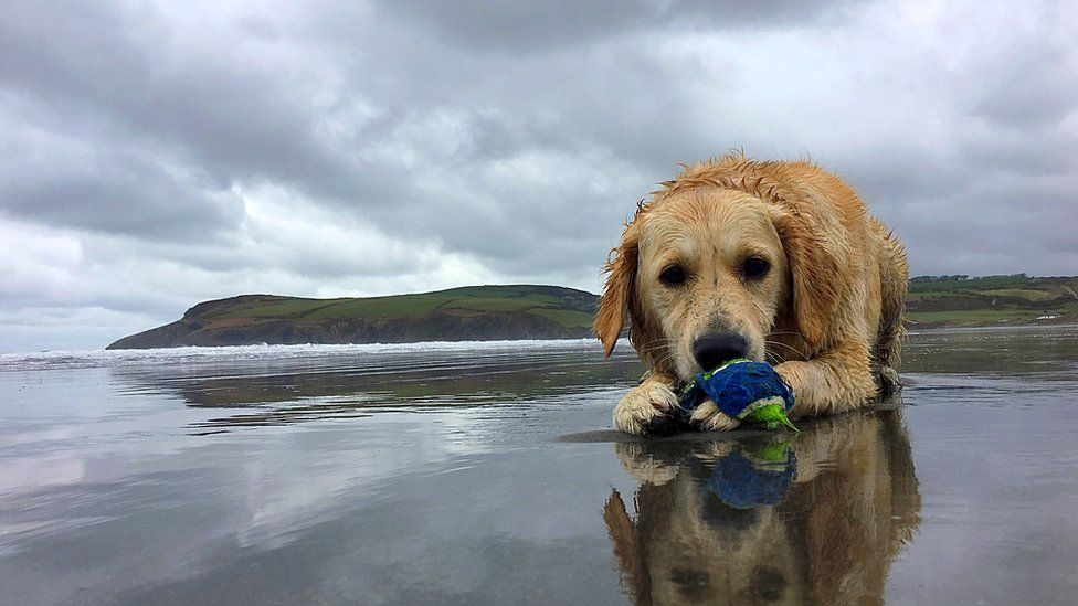 Layla the dog on Newport Sands beach