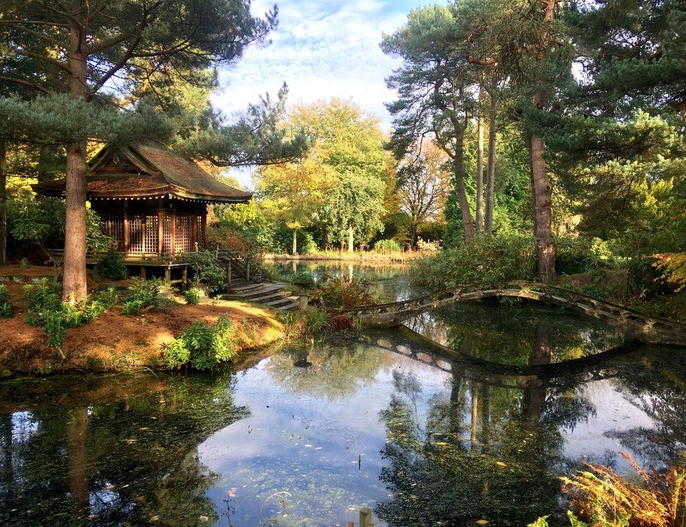 A Japanese style garden with autumnal colours