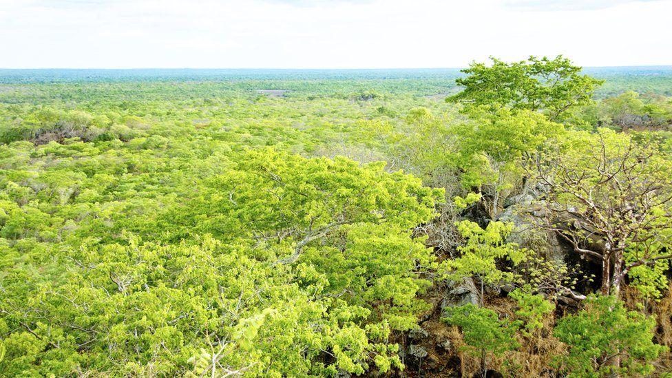 Kasungu National Park