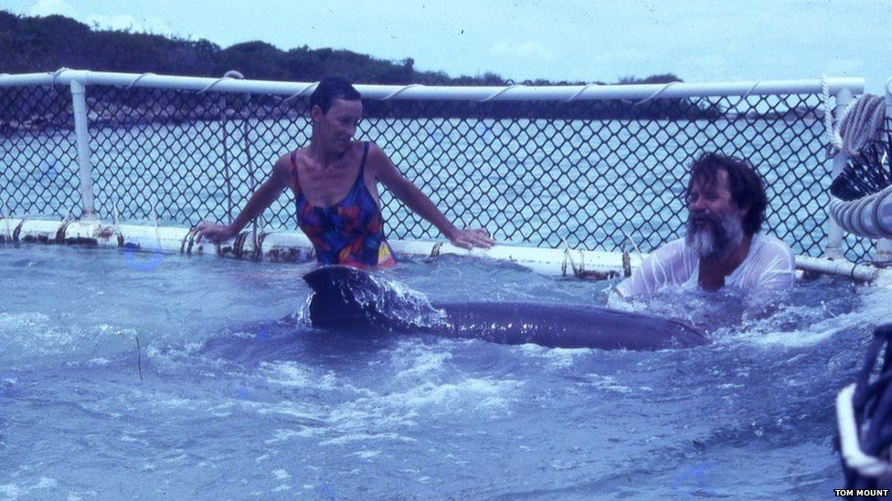 In this 1991 photo, Barbara Young (left) comforts a captive dolphin which was released in TCI