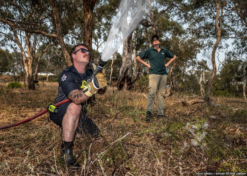 A firefighter from Melbourne's Metropolitan Fire Brigade sprays water to cool down the flying fox colonies