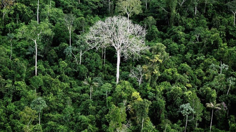 Trees tree-tops in the Amazon rainforest in the Amazon basin, Brazil, June 2012 Getty images